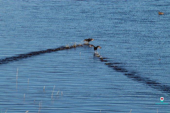 observatorio-aves-laguna-pitillas