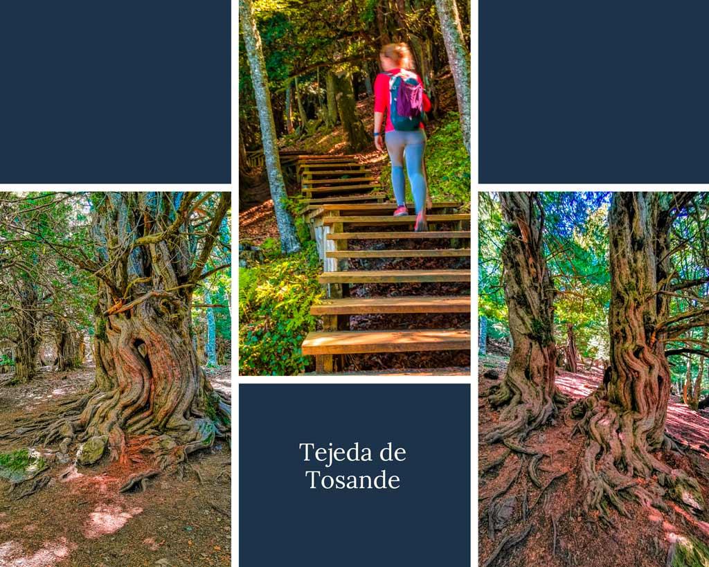 que-ver-que-hacer-en-la-montaña-palentina-Tejeda-de-Tosande